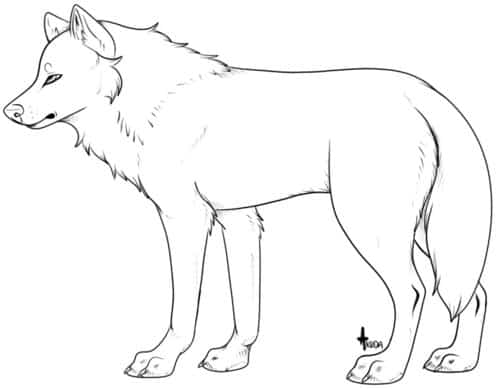 wolf template 82